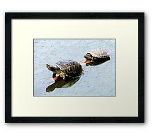 Turtle's Framed Print
