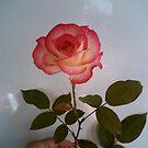 lovely rose by nutchip