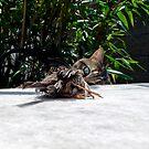 Nice birdie by Louise LeGresley