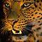 Animals Of Africa!