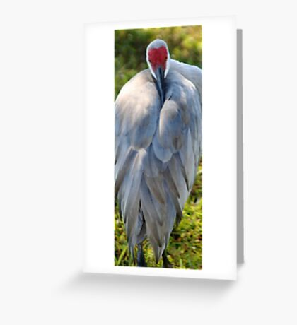 Sand Hill Crane 3 Greeting Card