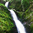 Dolgoch falls by Andy Cork