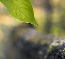 Lone Leaf - Dunrobin by Debbie Pinard
