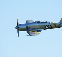 Sea Fury Close by WillOakley
