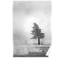 Yellowstone Trees in January Poster