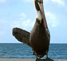 Waving Pelican 1 - Key West, Florida by Debbie Pinard