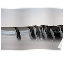 King Penguins - Volunteer Point, West Falkland Poster