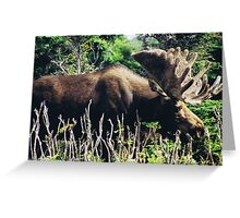 Moose on Cabot Trail in Nova Scotia Greeting Card