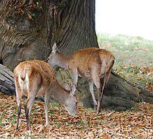 Deer Deer by dougie1page2