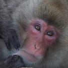 Snow Monkeys by Charlie  Lin