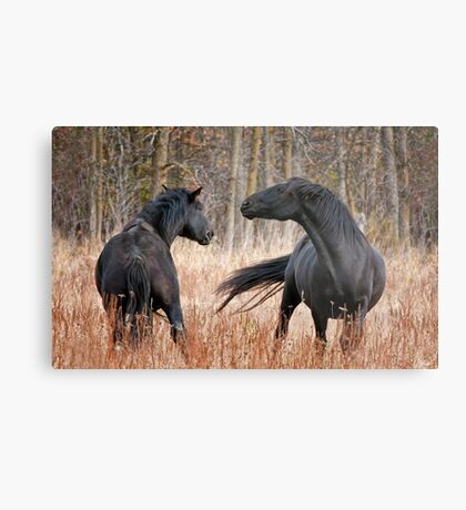 Looking for Trouble Metal Print