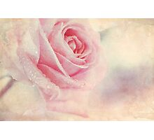 Antique Rose Photographic Print
