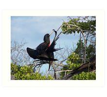 Frigid Bird Preening - Galapagos, Equador Art Print