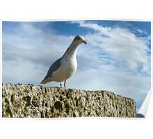 Gull On Rock Poster