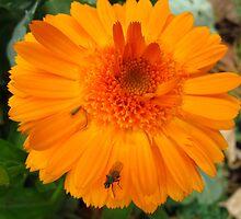 Orange respite by MarianBendeth