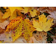 The colors of autumn Photographic Print