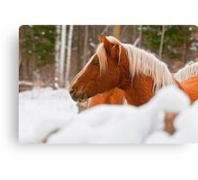 Equine Prince Canvas Print