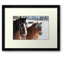 Equine Friends Framed Print
