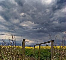 Summer Showers by Nigel Bangert