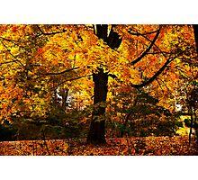 New England Maple Photographic Print