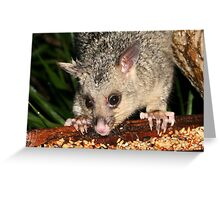 Baby Possum Pinching the Parrots Seed Greeting Card