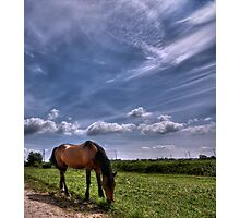 Sweet Country Scents Photographic Print