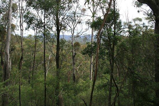 Nerrigundah in Dampier State Forest, NSW by aussiebushstick