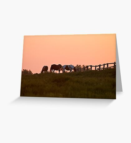 Equine Sunrise Greeting Card