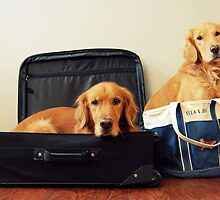 All Packed by Dexell1827