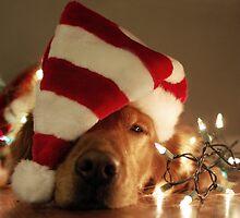 Sleepy Santa Paws by Dexell1827