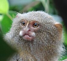 Monkey See by JuliasDepiction