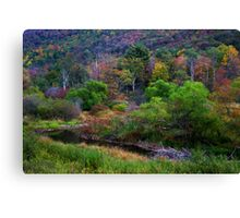 A Stream in Brush Canvas Print
