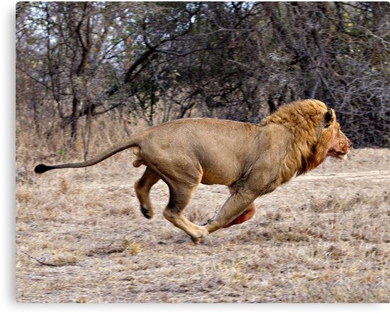 The Chase by Michael  Moss
