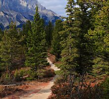 Trail in Banff by zumi