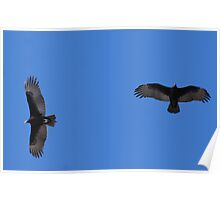 Two Vultures in Flight! Poster