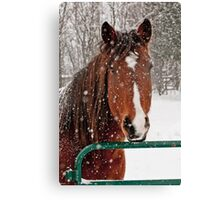 Horse In Snow Storm Canvas Print