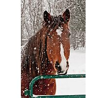 Horse In Snow Storm Photographic Print