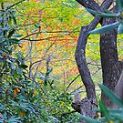 Nature&#x27;s Weekday Colors Hidden In A Patch Of Woods by Roger Jewell
