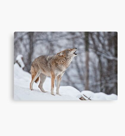 Howling Good Time Canvas Print