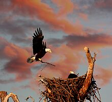 BALD EAGLE WITH LIMB by TomBaumker
