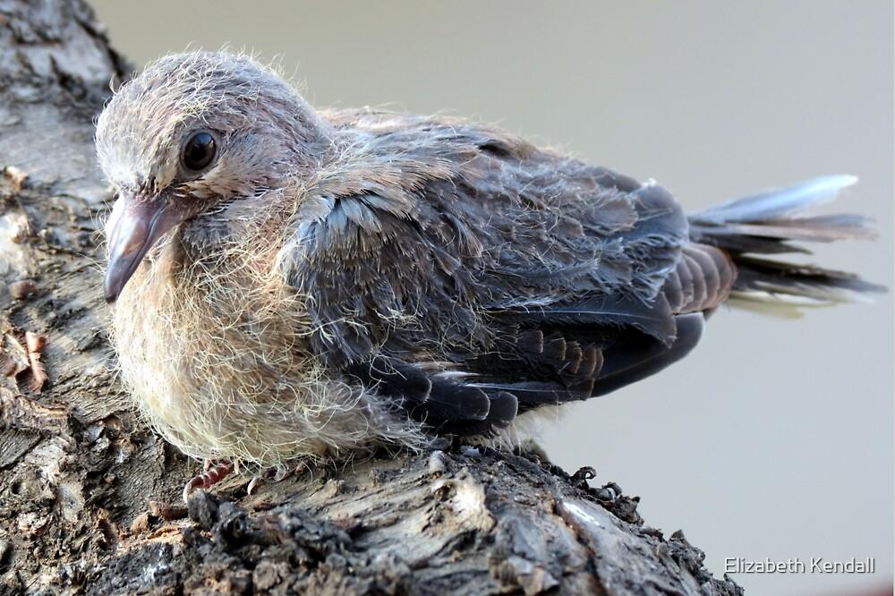 I'm only a fledgling!  by Elizabeth Kendall