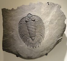 Fossil by franceslewis