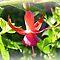 *Fuchsia - Quick Challenge - Enchanted Flowers*