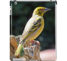 Spottedbacked Weaver iPad Case/Skin