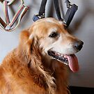 Ranch dog by LadyFi
