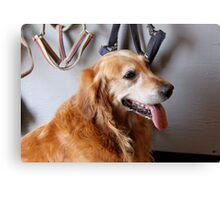 Ranch dog Canvas Print