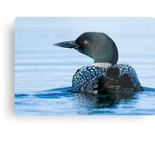 Common Loon - Mississippi Lake, Ontario Metal Print