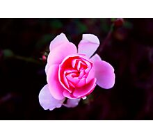 Ferry Flower Photographic Print