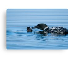 Loon feeding Baby - Mississippi Lake Canvas Print
