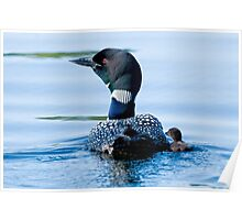 Adult Loon and Baby - Mississippi Lake, Ontario Poster